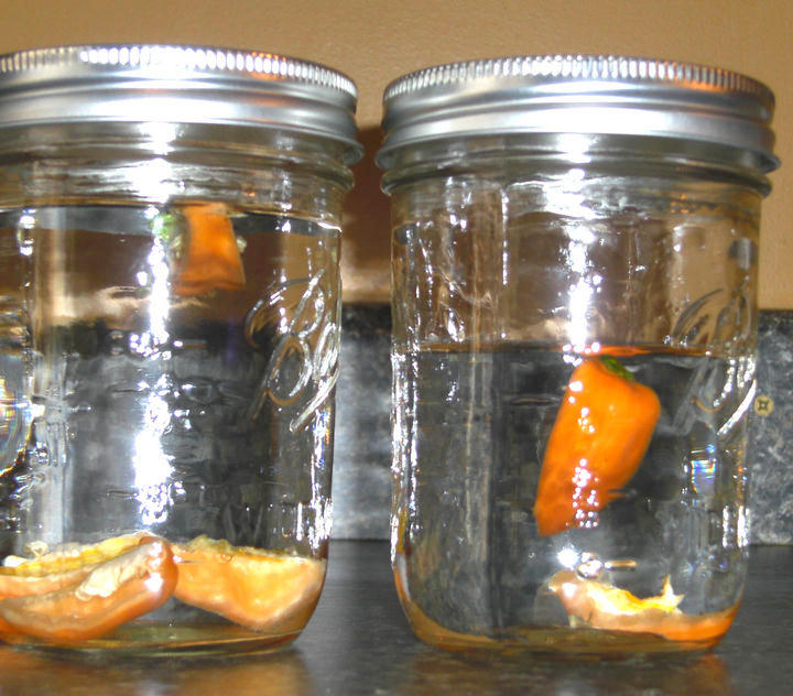 Habanero Infused Vodka and Tequila | MixnSip.com
